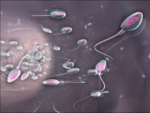 Close up computer generated image sperm moving in different directions egg / tracking shot sperm fertilizing egg