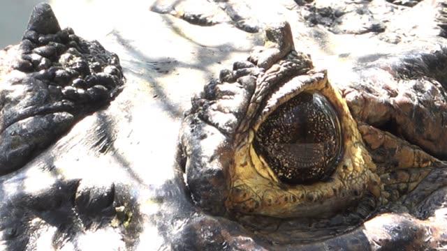 close up crocodile eyes. - one animal stock videos & royalty-free footage