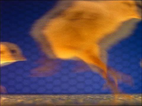 vídeos y material grabado en eventos de stock de close up crowd of baby chicks running past camera in coop - grupo mediano de animales