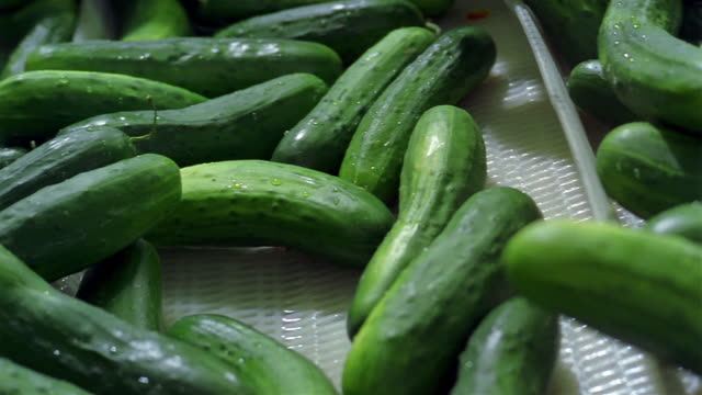 close up cucumbers moving on wet conveyor belt at juice factory - cucumber stock videos & royalty-free footage