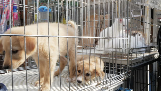 close up, dogs and cats in cages in qatar - captive animals stock videos & royalty-free footage