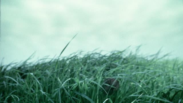 vidéos et rushes de close up dolly shot over and through grass with leaves falling / belgium - procédé croisé