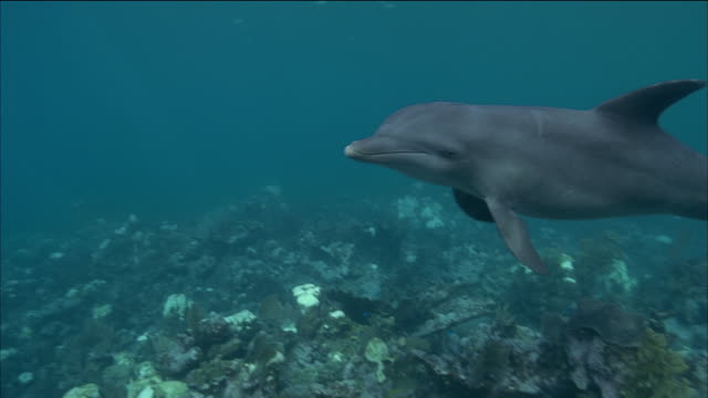 close up dolphin swimming underwater past cam / nassau, bahamas - nassau stock videos & royalty-free footage
