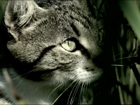 Close up face of cat standing in tall grass