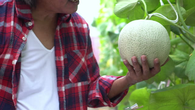 vídeos de stock e filmes b-roll de close up farmer check quality of melon and touch - qualidade
