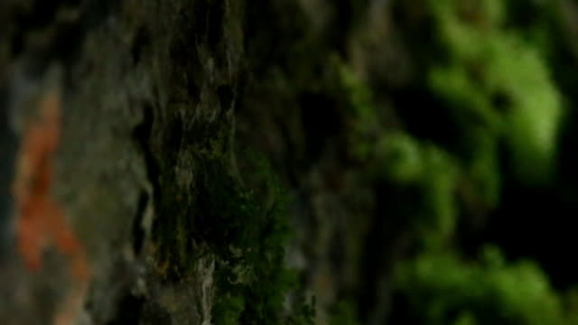 close up fern and moss under bridge - big hair stock videos and b-roll footage