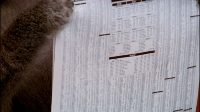 close up financial section of newspaper / zoom out to medium shot baboon holding paper and making face - baboon office stock videos & royalty-free footage