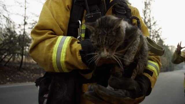 close up, firefighter holds rescued kitten - waldbrand stock-videos und b-roll-filmmaterial