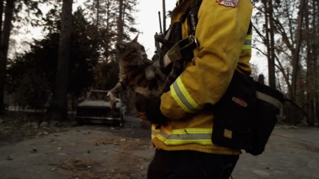 vídeos de stock e filmes b-roll de close up, firefighter rescues cat from wildfire rubble - resgate