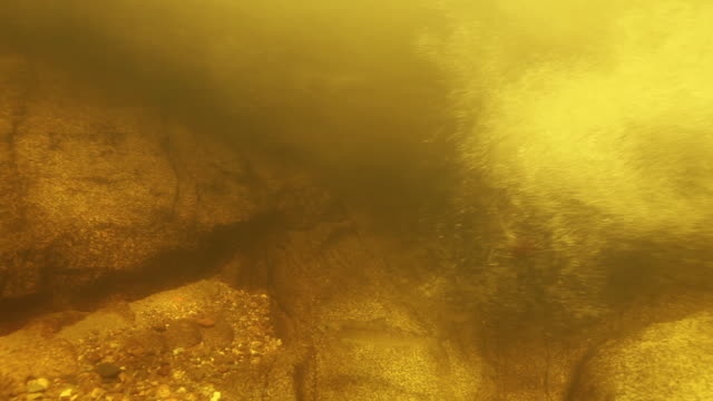 close up, fish swims against river current - tide stock videos & royalty-free footage