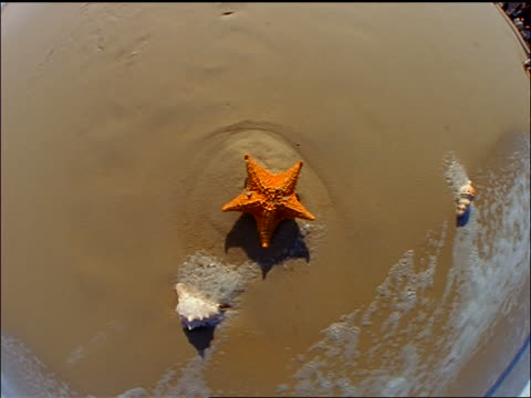 close up FISHEYE zoom out + zoom in orange starfish on wet sand on beach / water splashes over it