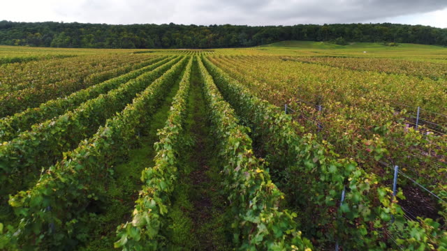 close up flying over vineyard in france - champagne stock videos & royalty-free footage