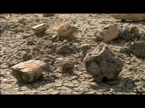 stockvideo's en b-roll-footage met close up fossils lying on top of caked mud at hell creek formation / finger pointing to fossils / montana - menselijke vinger