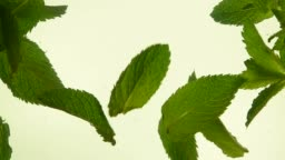 Close up fresh green mint leaves in tea