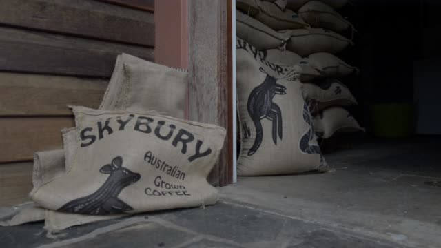 close up, freshly roasted coffee beans are inspected at the skybury coffee pty coffee plantation in the atherton tablelands, queensland, australia,... - saucer stock videos & royalty-free footage