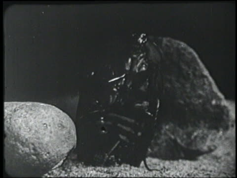 b/w 1954 close up giant beetle or cockroack standing on hind legs - 1954 bildbanksvideor och videomaterial från bakom kulisserna