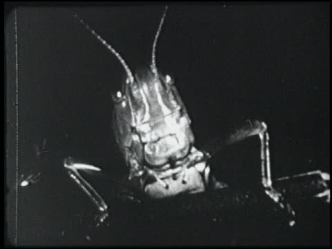 b/w 1954 close up giant grasshopper - 1954 stock videos & royalty-free footage