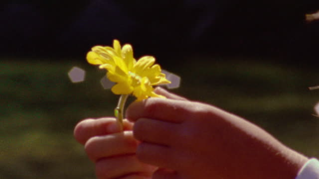 close up girl's hands holding yellow flower + picking petals off / water sparkling in background - absence stock videos & royalty-free footage