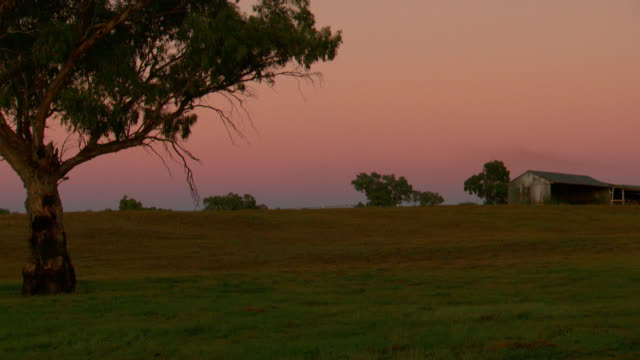 close up golden sunset glow low in sky pan along trees on horizon / twilight locked off shot looking along paddock fenceline in foreground - sunset... - grid stock videos & royalty-free footage