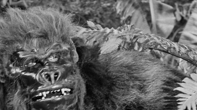 B/W close up gorilla-like creature (costume) climbing through brush + looking around