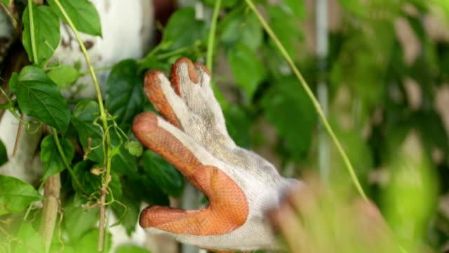 vidéos et rushes de gros plan gradening gants - gant de jardinage