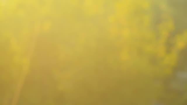 vídeos de stock, filmes e b-roll de clos'up:  grama de flores no vento durante o pôr-do-sol - cabelo verde