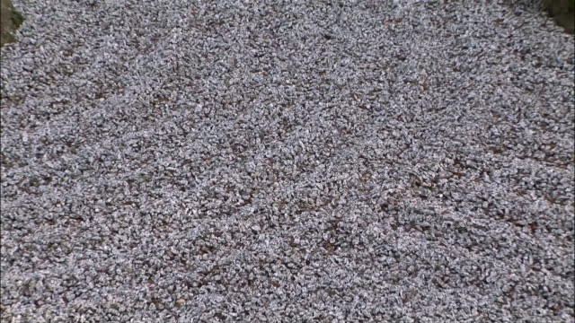close up gravel/ zoom out zen rock garden with three moss-covered rocks/ portland, oregon - gravel stock videos & royalty-free footage