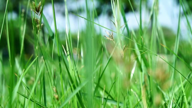 close up green grass moving. - selective focus stock videos & royalty-free footage