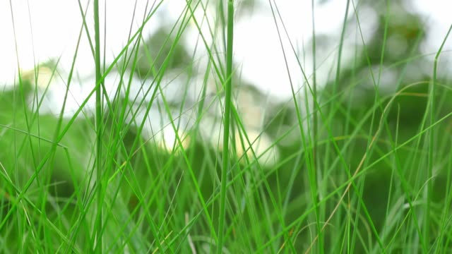 close up green grass moving. - messa a fuoco differenziale video stock e b–roll