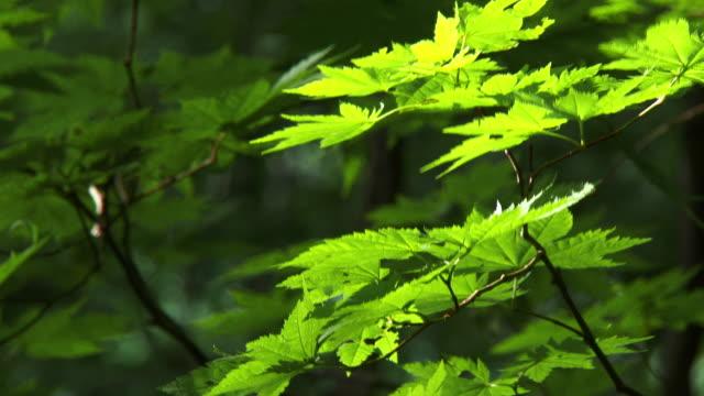 vídeos de stock, filmes e b-roll de close up green leaf - foco seletivo