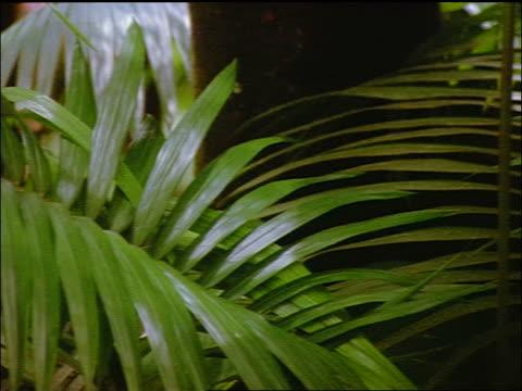 vidéos et rushes de close up pan green tropical plant / hawaii - angle de prise de vue