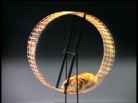 close up hamster running on hamster wheel - wheel stock videos & royalty-free footage