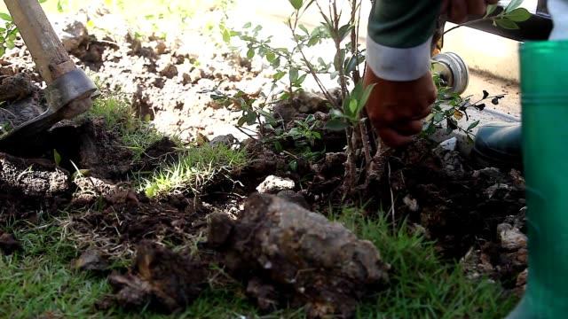 vídeos de stock, filmes e b-roll de close up mão de jardineiro homem mover árvore em outro buraco. - buraco