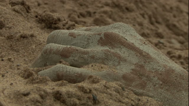 close up hand-held - sand blows over a human hand. / usa - dead person stock videos & royalty-free footage