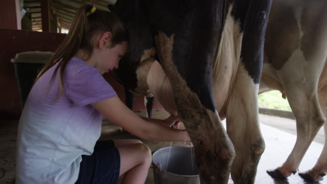 """""""close up handheld shot of girl milking cow in barn / arenal, alajuela, costa rica"""" - milking stock videos & royalty-free footage"""