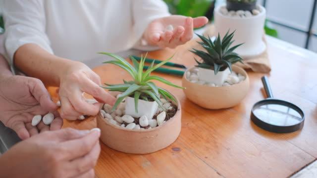 close up hands of senior man and woman help to plant cactus - ガーデニング点の映像素材/bロール