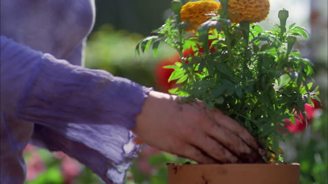 Close up hands of woman packing soil while putting flower in planter