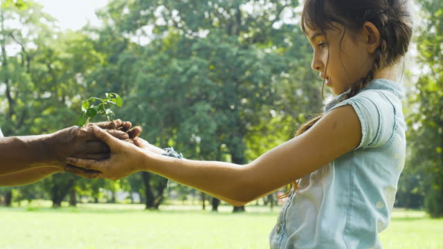 close up hands of young girl receive young plant - savings stock videos & royalty-free footage