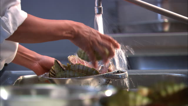 Close up hands rinsing scallops in colander under faucet / Auckland, New Zealand