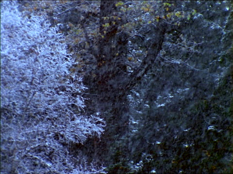 vidéos et rushes de close up heavy snow falling in front off trees / utah - cinématographie