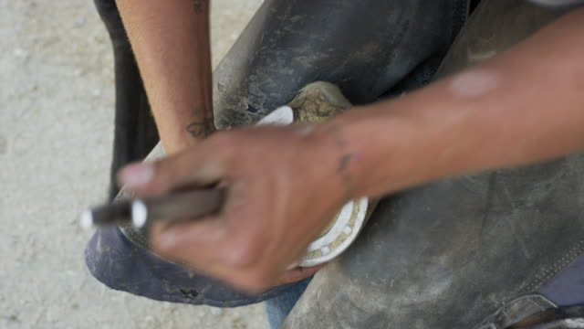 close up high angle view of man removing horseshoe from hoof / lehi, utah, united states - lehi stock videos & royalty-free footage