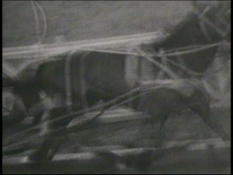 vídeos y material grabado en eventos de stock de b/w 1951 close up pan horse-drawn chariot passing camera on track during race / italy / newsreel - 1951