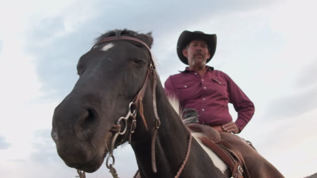 Close up horses head shaking flies away cowboy smiles in the background