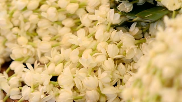 close up : jasmine flower in temple - gold rush stock videos and b-roll footage