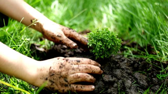 stäng upp kid hand plantering unga träd - plantera bildbanksvideor och videomaterial från bakom kulisserna