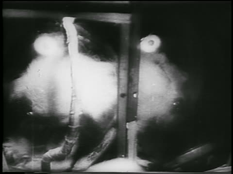 close up laika the dog in sputnik 2 space capsule / newsreel - 1957 stock-videos und b-roll-filmmaterial
