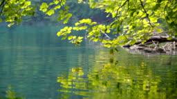 Close up lake scenery of Plitvice Lakes, Croatia.