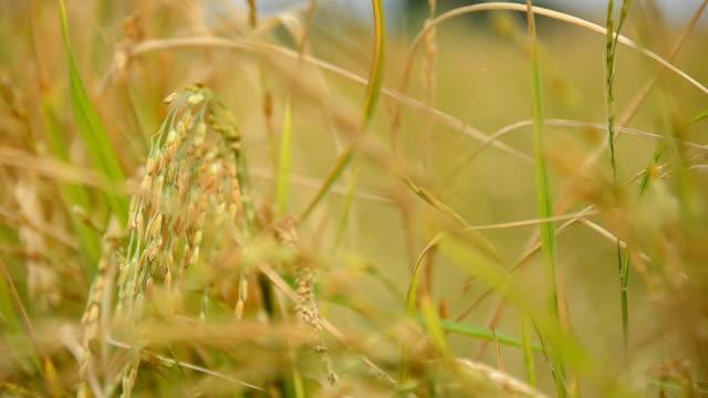 クローズアップ左側のベア穀物製品 - 農家の家点の映像素材/bロール