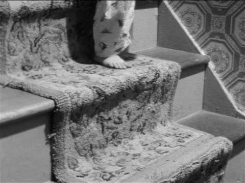 vidéos et rushes de b/w 1957 close up legs of child wearing pajamas climbing down carpeted stairs / educational - marches et escaliers