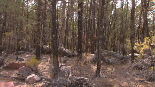 vídeos y material grabado en eventos de stock de close up lichen on tree bark / various shots close up trees and dense bush land on rocky terrain lichen on boulders - bush land